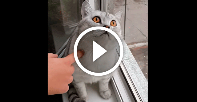 Кот который сломался