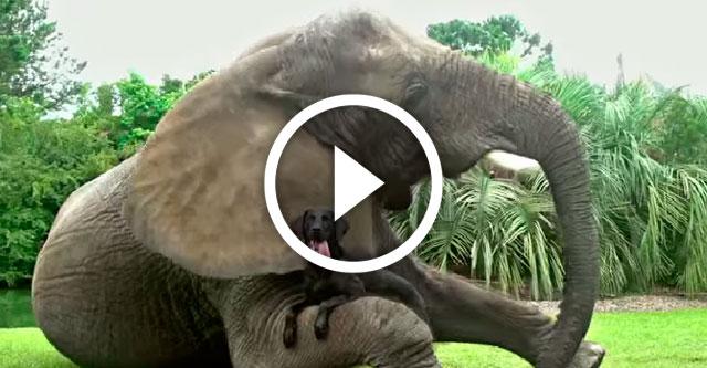 Видео дружбы разных животных