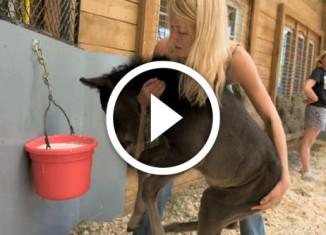 Женщина спасает лошадей