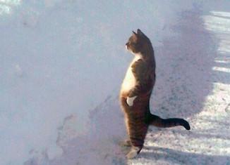 Коты которые любят стоять