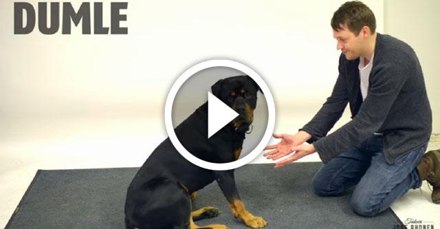 Ловкость рук и собаки