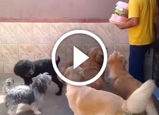 выдержка собак