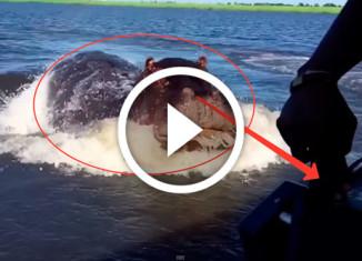 бегемот догоняет лодку
