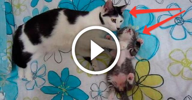 кошка обнимает котёнка