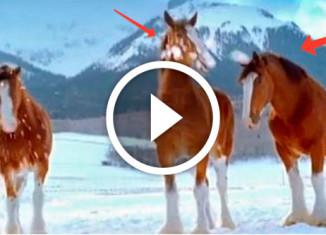 лошади играют в снежки