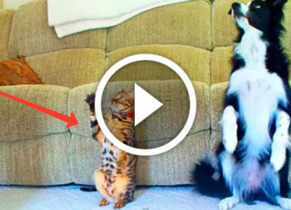 собака против кота