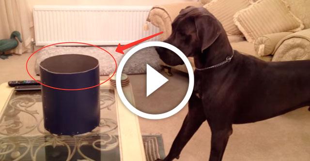 знакомство собаки с утенком