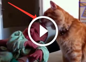Животные знакомятся с малышами