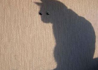 фото с тенью