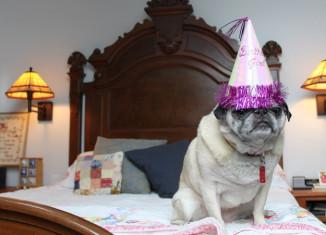 собаки празднуют день рождения