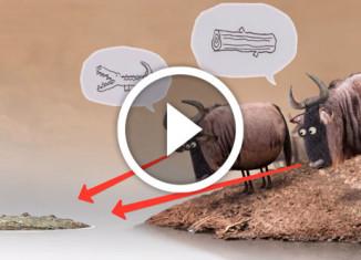 антилопы спорят возле реки