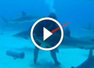 как загипнотизировать акулу