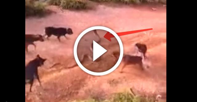 кобра против собак