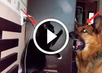кот играет с осбакой
