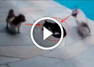 кот отомстил собакам