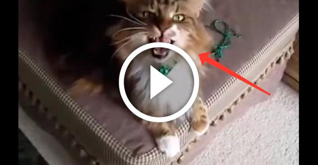 кот подпевает хозяйке
