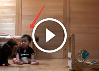 кот учит ребенка ходить