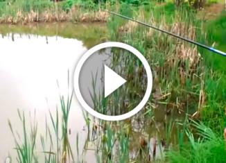 кот украл рыбу с удочки