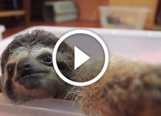ленивец делает селфи