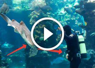 массаж для акулы