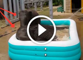 слонята купаются в бассейне