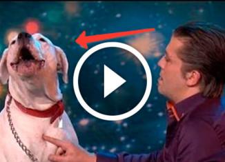 собака исполняет мировой хит