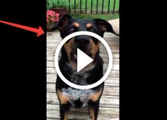 собака лает шепотом