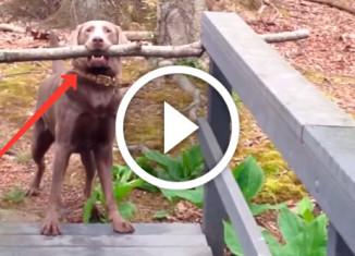 собака с палкой на мосту