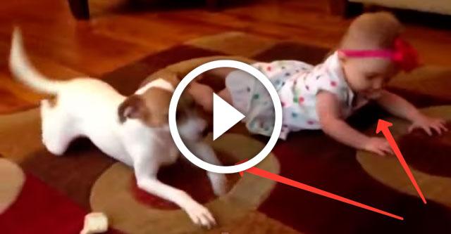 собака учит ребенка ползать