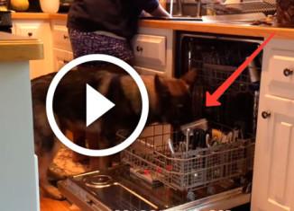 собака занимается домашними делами