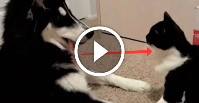 собаки привлекают внимание котов