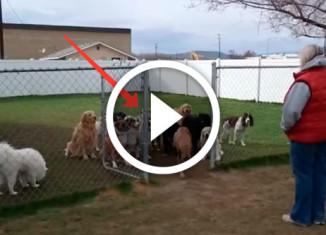 собаки ждут команду