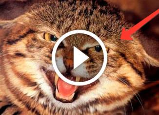 темная сторона котов