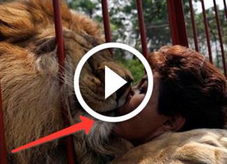 в объятиях льва