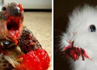 животные едят ягоды