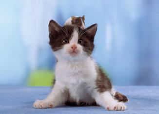 кот и мышь - лучшие друзья