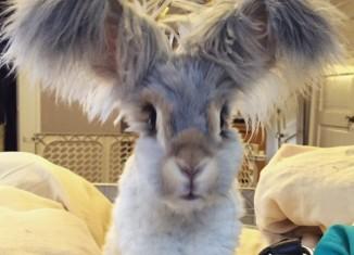 кролик Валли