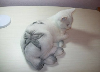 кошачьи стрижки