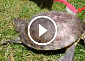 черепаха зажигает
