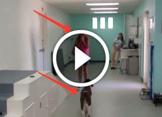 чудо для парализованной собаки