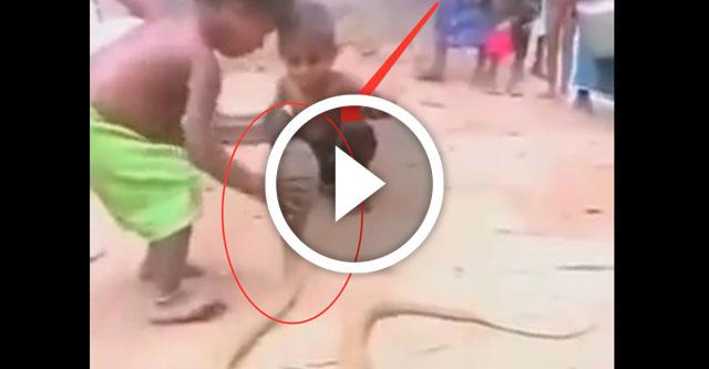 девочка играет с коброй