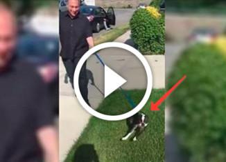 хозяин нашел пропавшую собаку