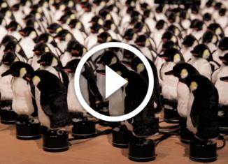 интерактивное зеркало из пингвинов