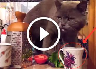 кот нашел способ пить молоко