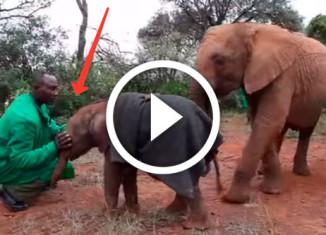люди спасают слоненка