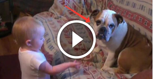 малыш ругает собаку