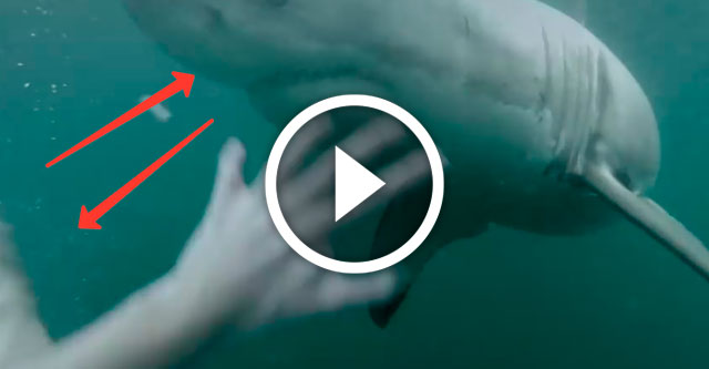 парень наткнулся на акулу