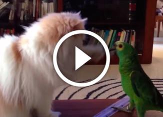 первые знакомства кошек с другими животными