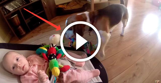 пес забрал игрушку