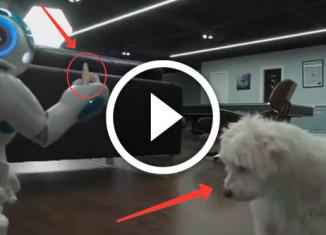 робот кормит собаку печеньем